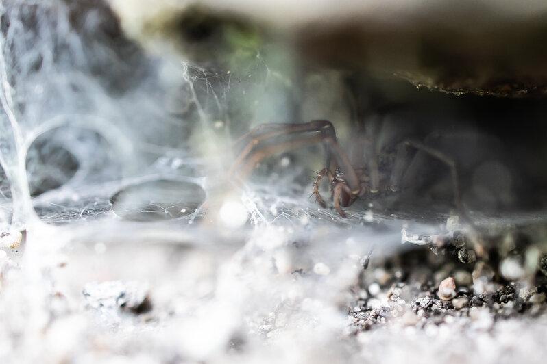 Обитатели стены бастиона Грольман (фото) - Новости Калининграда