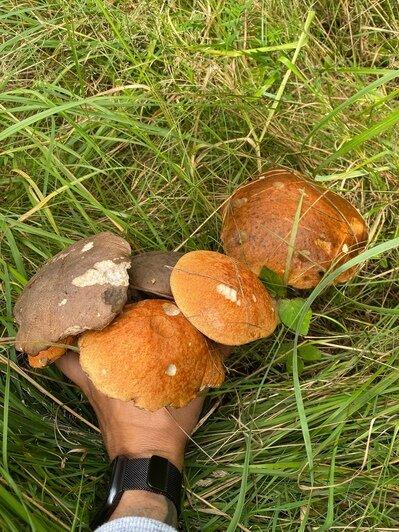 После дождей пошли грибы: калининградцы хвастаются добычей - Новости Калининграда | Фото: Сергей Подтягин