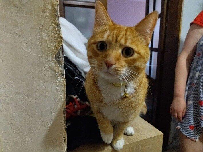 Спасённый кот Лаки   Фото: Ольга Запивалова / «Клопс»
